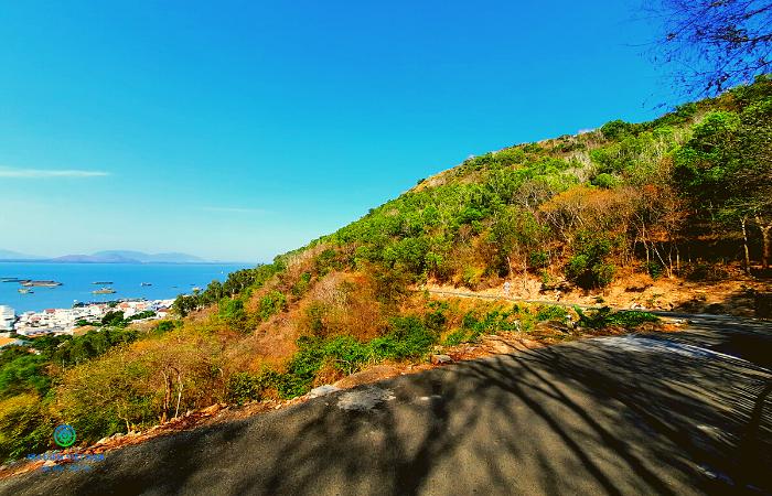 Mùa Lá Khô Núi Lớn Vũng Tàu | Hẻm 444 Trần Phú