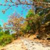 Mùa Lá Khô Núi Lớn Vũng Tàu   Hẻm 444 Trần Phú