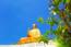 Thiền Viện Chơn Khôn...